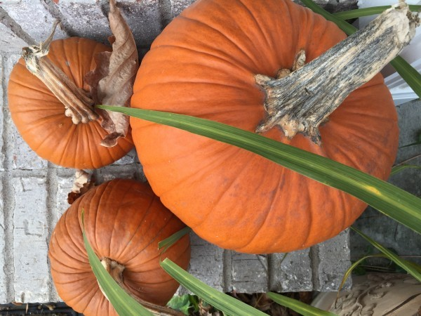 Three Turkey Time Tips! - Arthritis Wisdom
