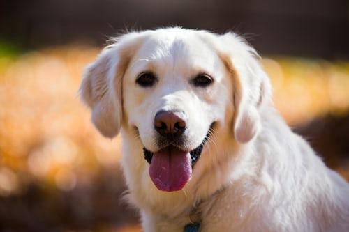 my dog was reason for autoimmune curiosity