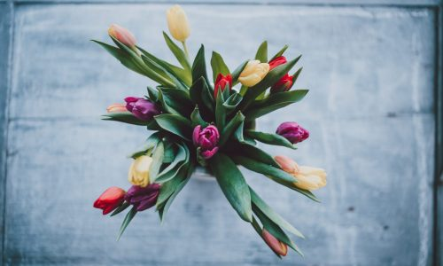tulips improve emotional health